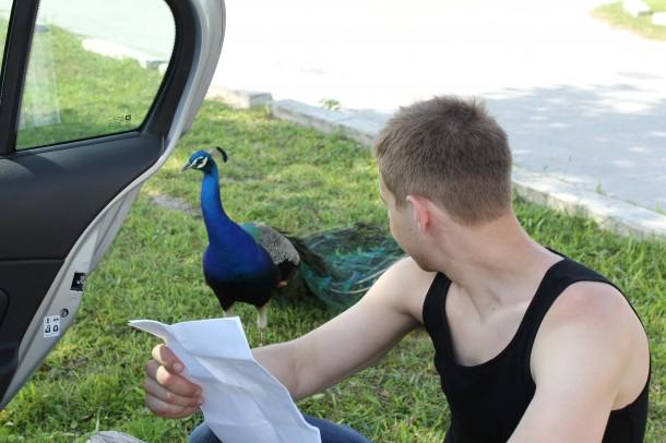 peacock at sawgrass mills park