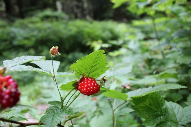 port moody berries
