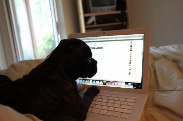 puppy typing