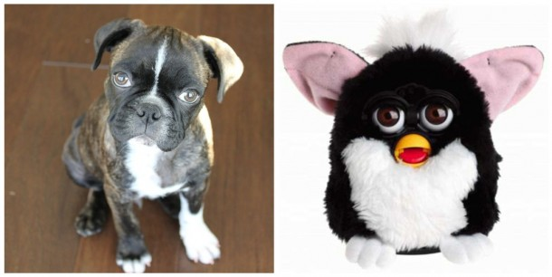 furbie vs dog
