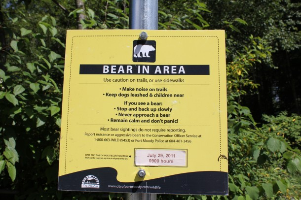 Port Moody bear in Area