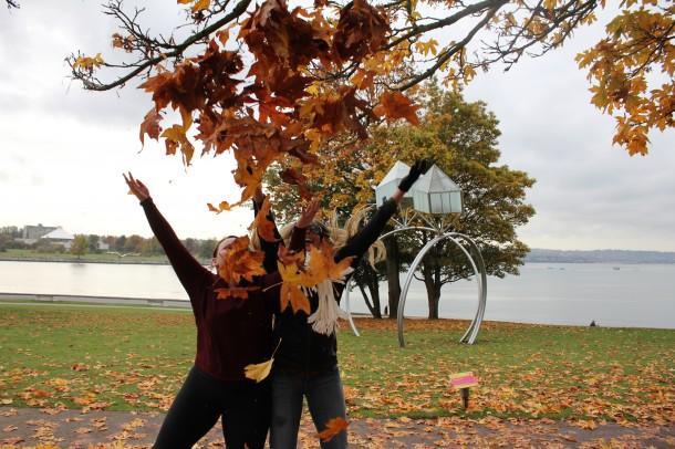 fun leaves